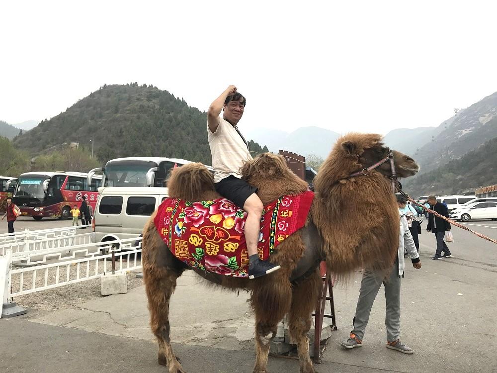 Cưỡi lạc đà